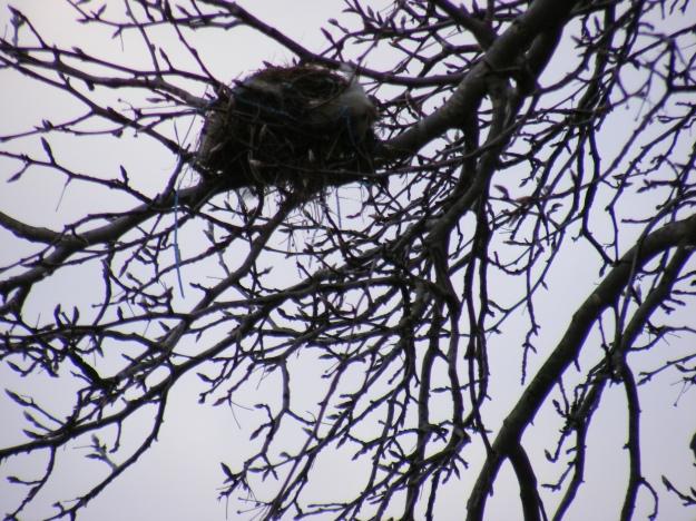 nest.1