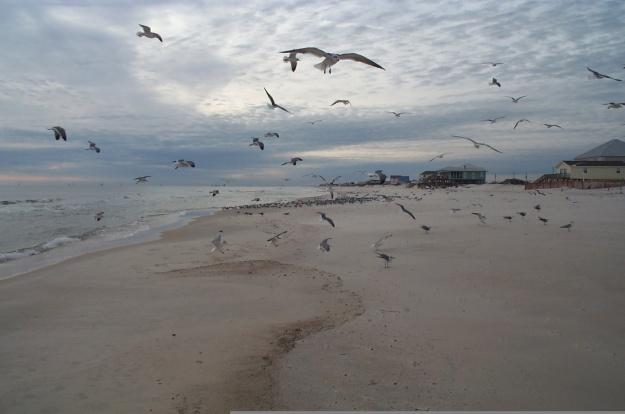 seagulls,jpg