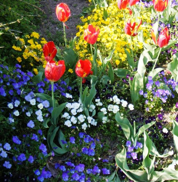 Springflowerscrop