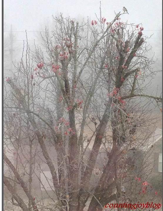 FoggyTree.1