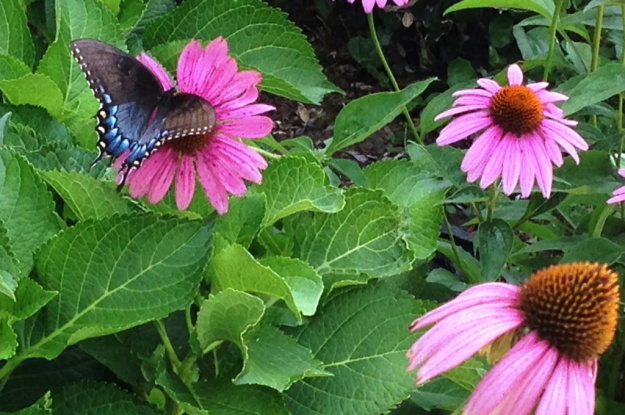 Butterfly.Purple