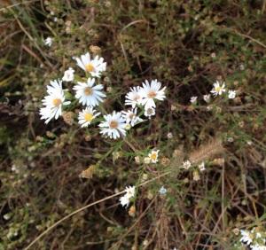 Whiteflowers.2
