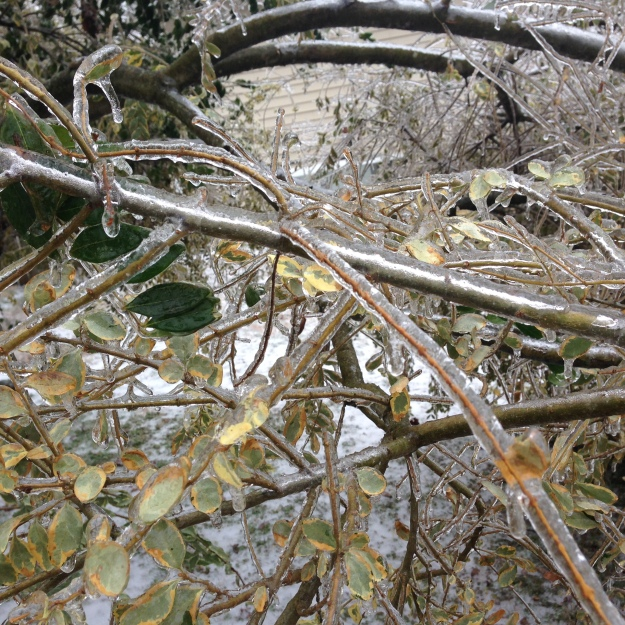 iced-branches